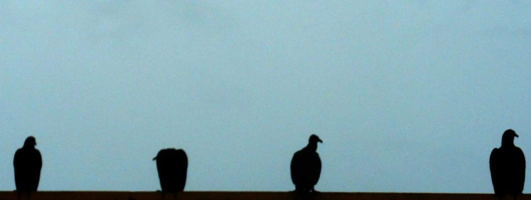 Metafísica Zoé: Urubus, andorinhas e outros bichos