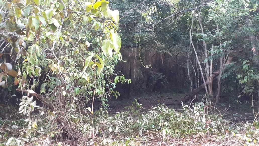 Moradores chamam polícia para combater desmatamento no igapó do Jacundá
