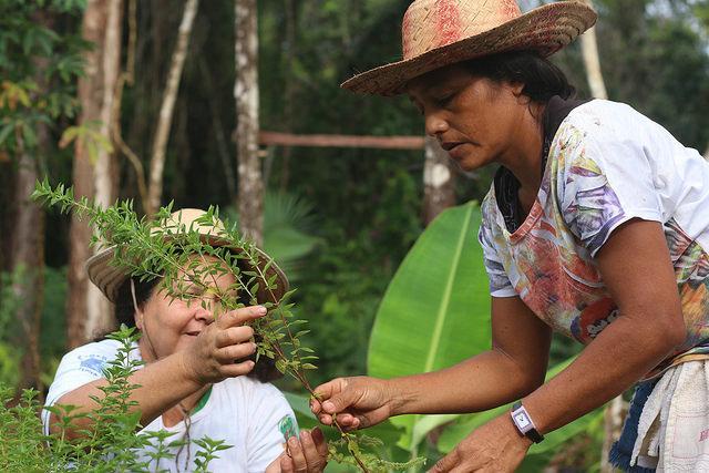 Amabela, a história de 75 agricultoras de Belterra contra o veneno da soja