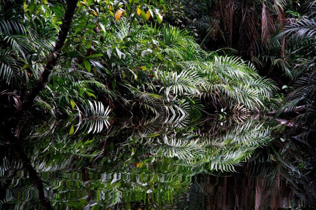 Floresta Encantada | Foto: Mari Brunini
