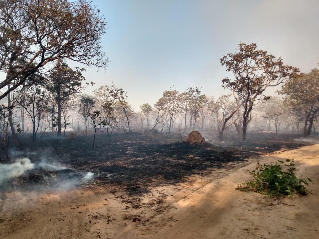 Grilagem de terra em Alter do Chão e a causa do incêndio