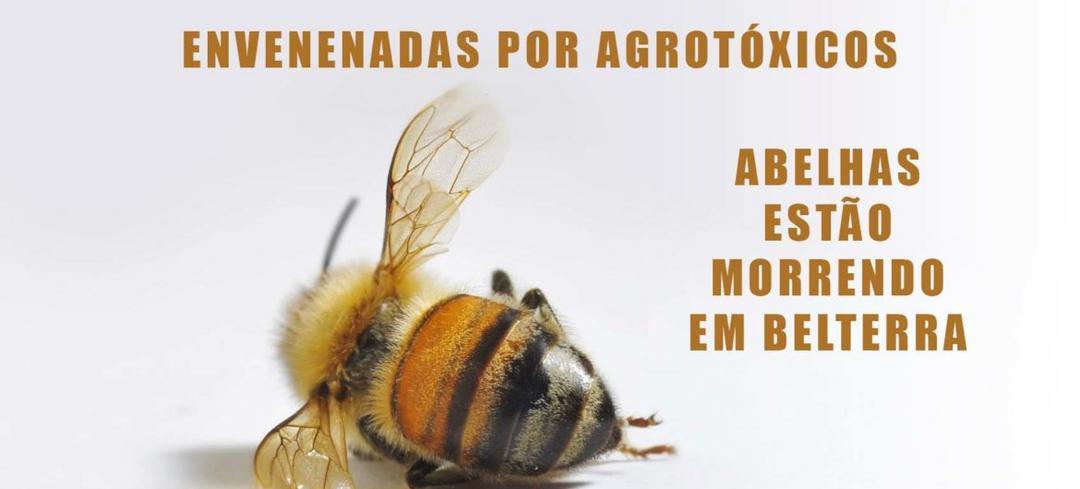 Soja e uso excessivo de agrotóxicos modificam apicultura no Oeste do Pará