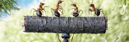 Quem não pode com formiga não assanha o formigueiro