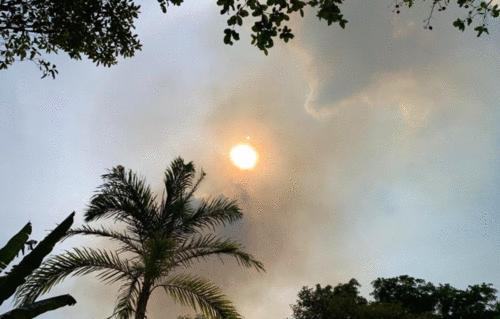 Incêndio na savana de Alter do Chão une comunidade