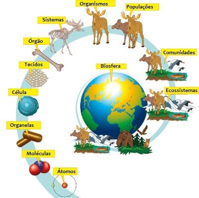 O corpo humano, o ecossistema vivo